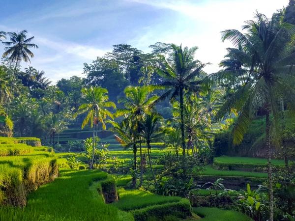 Bali et les rizières de Tegalalang