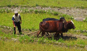 Circuit Annapurna Jour 2 : Bhulbhule - Jagat